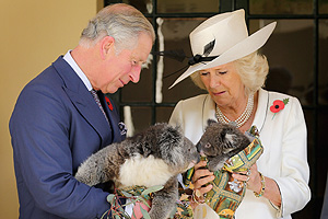 Kiss me quick: koalas get cuddly for Prince Charles and the Duchess of Cornwall
